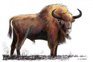 Paleo Buffalo